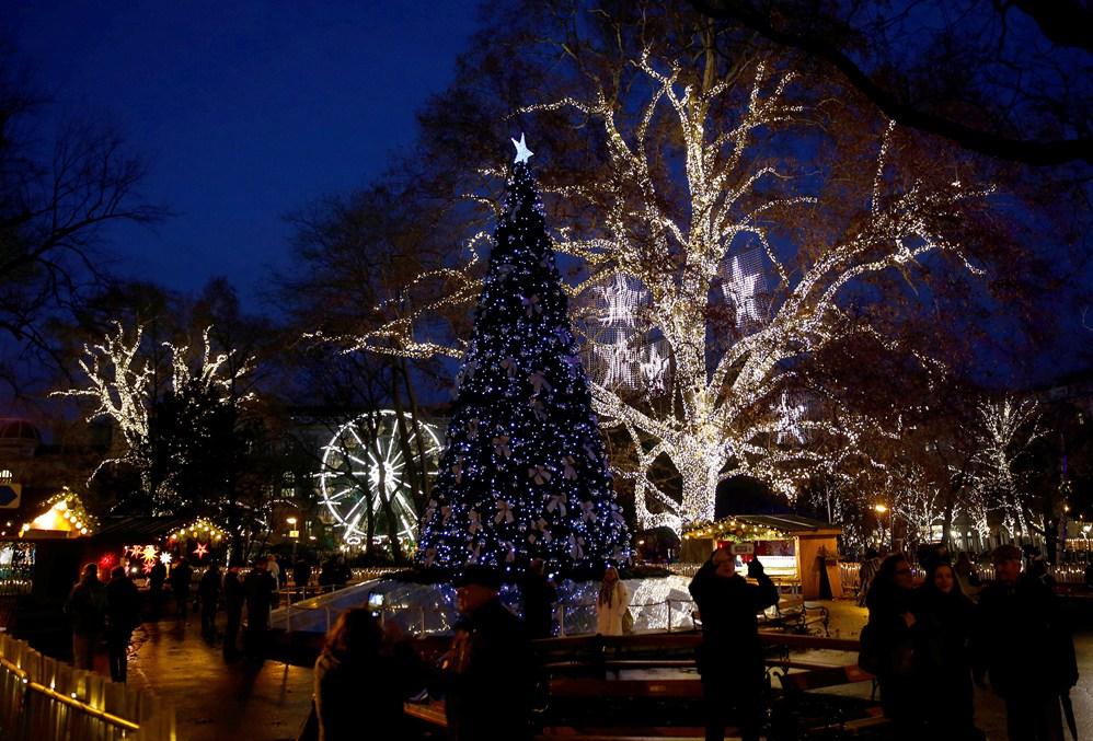 Majestuosos conoce los mejores rboles de navidad del - Los mejores arboles de navidad ...